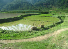 Cnh ng la ngt ngo (Mayxanh15) Tags: mountain field rice k15 dongbac