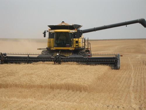 Harvest in Arnett, Okla.