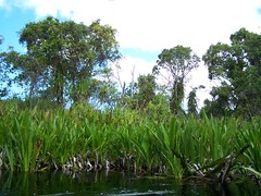 Siska_20 (RarePlanet) Tags: wildlife reserve credit aceh singkil photo fransisca bogor1 rawa sumatra ariantiningsih