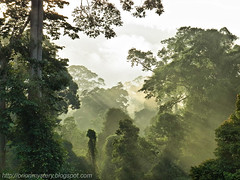 misty forest in the morning, maliau basin R0012520 copy