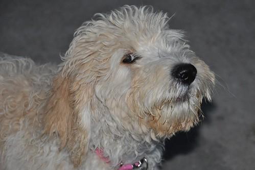 Toto (aka, Abbie)