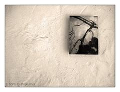 Wall Painting (SamDRajkumar) Tags: blackandwhite wall canon painting minimal minimalist wallpainting canonixus95is