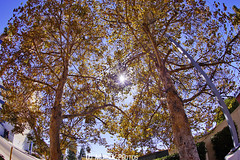 Fall colors.. (dj murdok photos) Tags: djmurdokphotos sony alpha a7ii 16mmfisheye