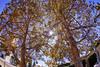 Fall colors.. (dj murdok photos) Tags: djmurdokphotos sony alpha a7ii 16mmfisheye