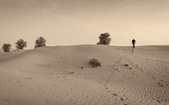 Dubai desert in b/w (Tigra K) Tags: dubai unitedarabemirates ae 2013 color landscape nature plant tree