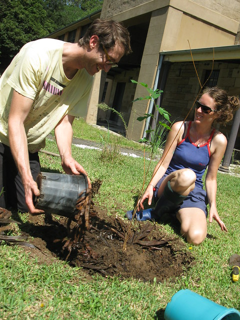 planting a mulberry