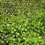 Wildflower_Center_116 thumbnail