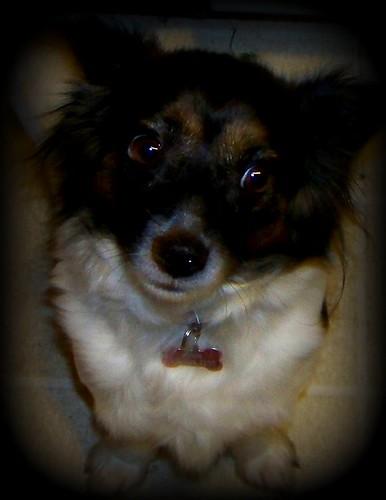 Twinkle dog2