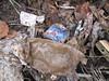 compostiere agli orti regolamentati 38