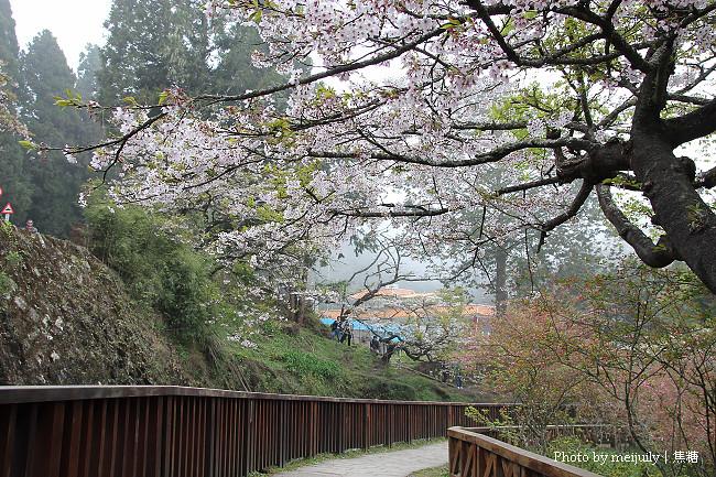 阿里山櫻花季陰天版13