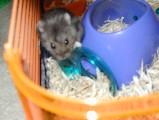 Fabio the Hamster