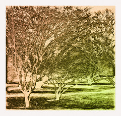 Treetched (artphoto2005) Tags: trees photoshop etching windy longwoodgardens