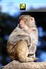 Monkeys are superior to men in this: when a monkey looks into a mirror, he sees a monkey. -Malcolm De Chazal (Muhammad Fahad Raza) Tags: pakistan nature monkey wildlife shy ali attitude monkeys punjab creatures tame asif khyber civilised bandar ayubia kpk 40d pakhtunkhwa zardari nakhra asifalizardari sharmeela shymonkey bandardanakhra