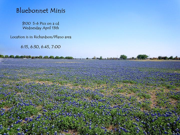 Bluebonnet Miniweb