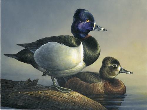 2011 Junior Duck Stamp Contest Winner, Abraham Hunter
