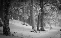 Winter II WP (Kim Ledin) Tags: desktop trees winter wallpaper snow cold tree forest woods sweden 1680x1050