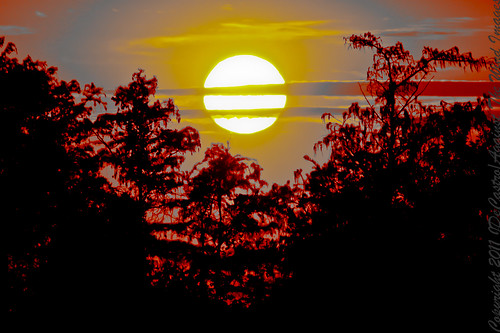 Palmetto Sunset-_MG_4251 by Against The Wind Images