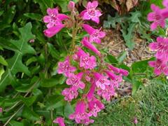 backyard April blooms