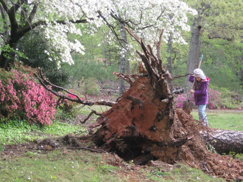 "storm damage aka ""catastrophic tree failure"""