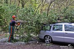 Baum auf PKW Goldsteintal 12.04.11