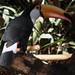 Parque das Ave / Foz do Iguaçú / Brasil