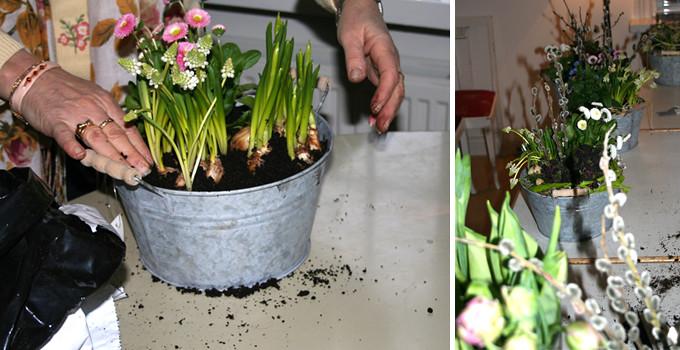 gröna växter 3