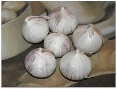 Dan Lepard's Garlic Bread