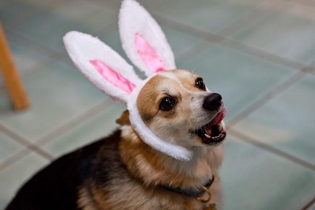 186/365-2 Easter Jane