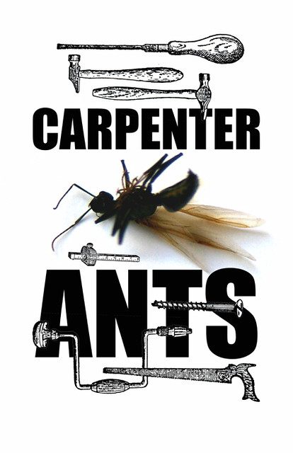 CARPENTERANTS psd