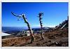 Shika Snow Mountain : The Symbolic Wooden Stick : :我爬 石卡雪山 之行 (Kenny Teo (zoompict)) Tags: china mountain snow yahoo google shangrila yunnan kenny zoompict shikasnowmountain
