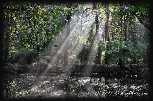 Sun rays at Alfred Nicholas Gardens