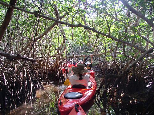 Kayaking through the Florida Keys Mangroves