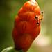 R. Branco - Acre - Formigas...