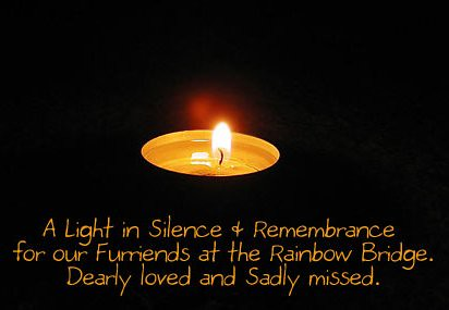 A Light in Silence & Remembrance 2011