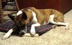 2 dogs2 (ellishackler) Tags: max ray ellis mark jim lori nancy maxwell hack deanna dee keerti hackler ellishackler