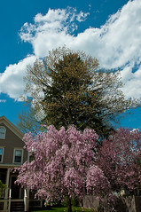 Trees Across the Street (Paul Broderick) Tags: usa nikond90