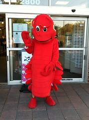 Crawdaddy Mascot