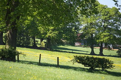 Countryside (kh1234567890) Tags: field pentax 1855mm dandelions k7 alderleyedge smcpentaxda1855mmf3556alwr smcpda1855mmf3556alwr