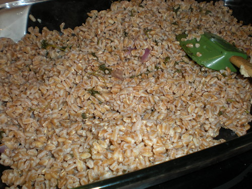 Cooling the farro after cooking