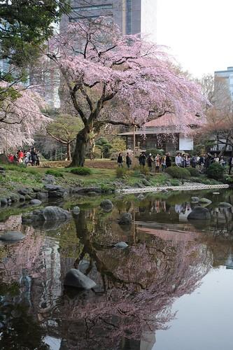 Sakura@Kourakuen