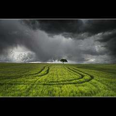 Surcos (Ariasgonzalo) Tags: paisajes landscapes rboles nubes cielos cereales hdr zamora castilla encinas tormentas surcos tierradecampos fleursetpaysages