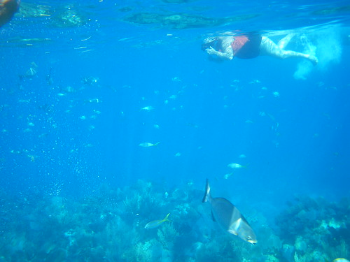 Snorkeling,  Key Largo