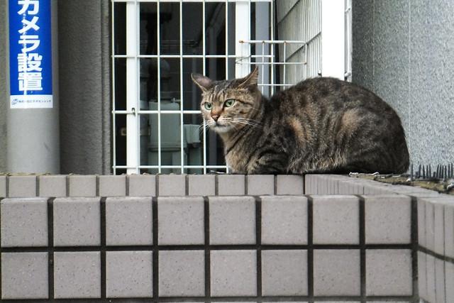 Today's Cat@2011-05-26