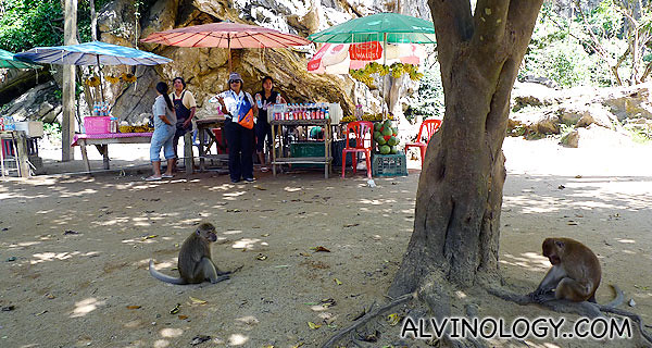 Lazy monkeys greeted us at the cave entrance