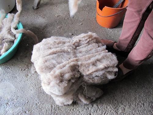 pastas de lã