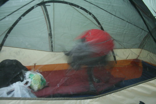 Misty sleeping in the tent