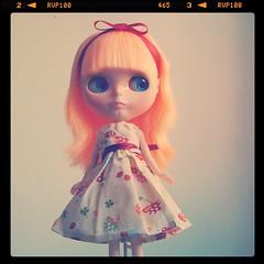 Alice's mushrooms!