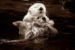 4 Sea otter