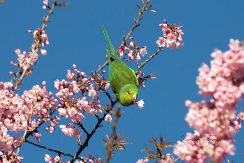 Um passarinho verde me contou um segredo...