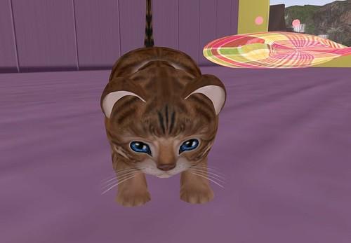 cat housekeeper_006